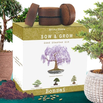 Nature's Blossom Bonsai Tree Growing Kit