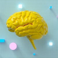 Adult language learning literally rereoutes brain networks — study