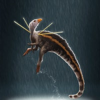 Paleontologists find tiny, flamboyant dinosaur in ground-breaking discovery
