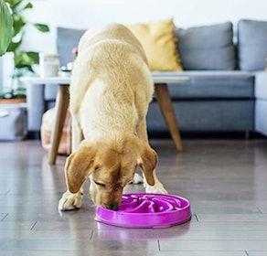 Outward Hound Slow-Feeder Dog Bowl