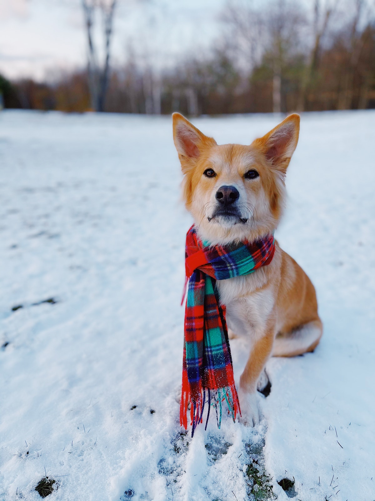 The Dogist is sharing iPhone dog photo tips that'll help you capture the perfect shot.