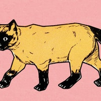 Killer cats: The surprising behavior of your favorite pet