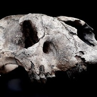 7 archaeological discoveries that rewrote history in 2020