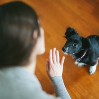 Study reveals the best way to train your dog