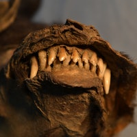 Mummified Ice Age puppy's final snack stuns scientists