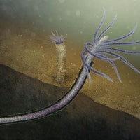An ancient worm-like creature is an evolutionary miracle