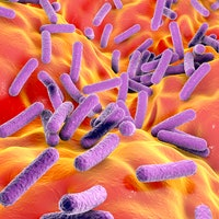 Microbiome linked to the likelihood of specific personalities — study