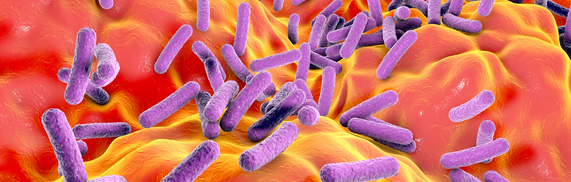 Bacterial species found in the human gut