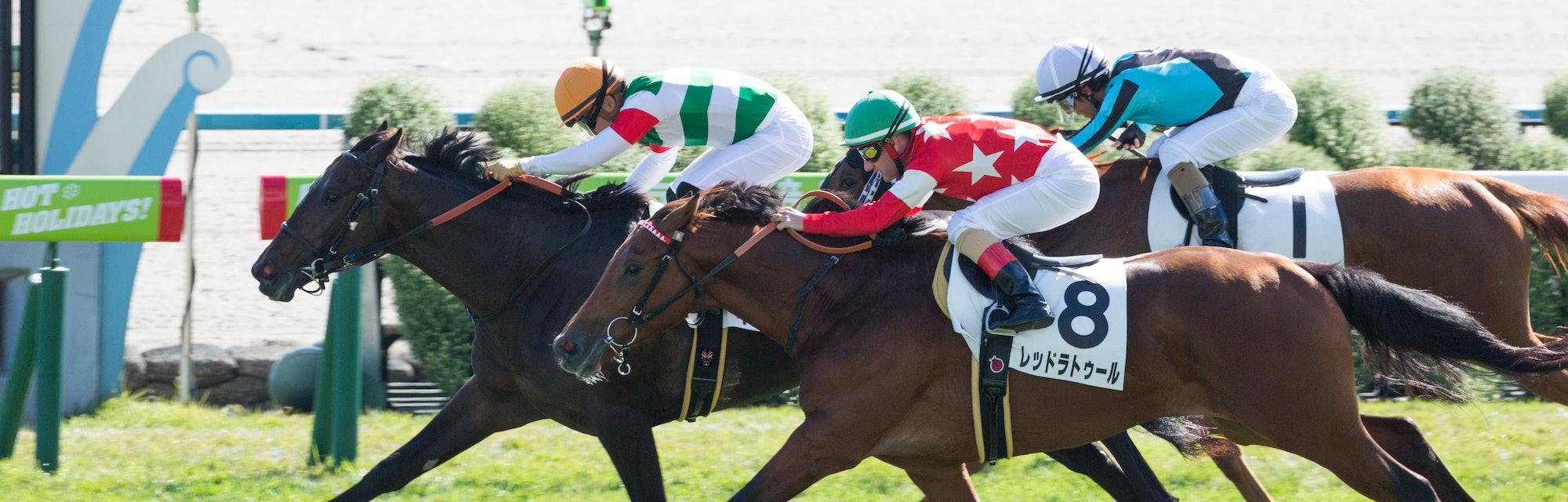 KYOTO, JAPAN - November 2 : Jockey Yuga Kawada riding King Saga (Number 10) wins the Race 4 (2-Year-...
