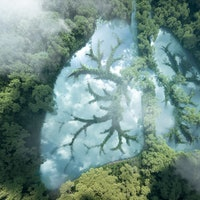 10 images show how 'nature is healing' in 2020