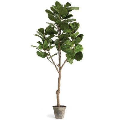 Fida French Country Green Fiddle Leaf Brown Clay Potted Fig Tree
