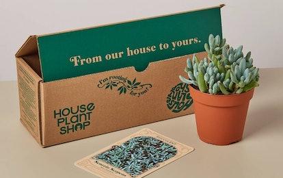 Succulent Box (Priced Per Month)