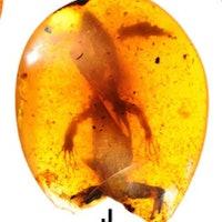 An ancient case of mistaken identity reveals a strange amphibian