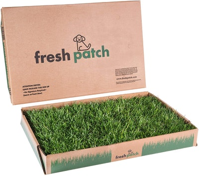 Fresh Patch Disposable Dog Pee Pad with Real Grass