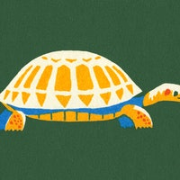 Tortoises and humans share this one unique trait