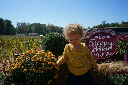 The author's toddler daughter in front of some mums and a sign that says 'Sleepy Hollow Farm'
