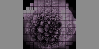 romanesco cauliflower 3.2 billion pixel image