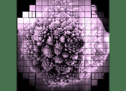 romanesco cauliflower 3.2 billion pixel image