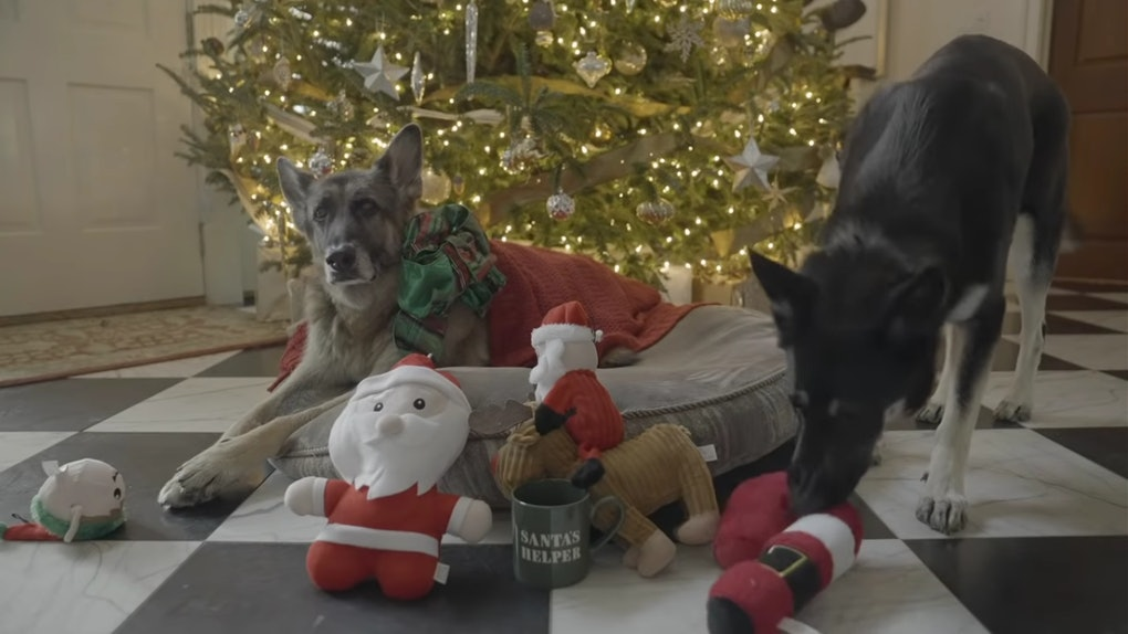 Joe Biden's dogs Champ and Major starred in a 2020 Christmas video.