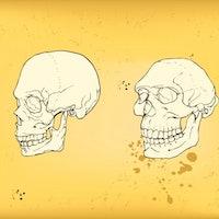 "Ancient DNA study reveals a mysterious ""super archaic"" ancestor"