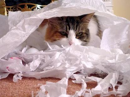 Anxious pets can get destructive.