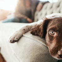 How to help your pet overcome separation anxiety when you return to work