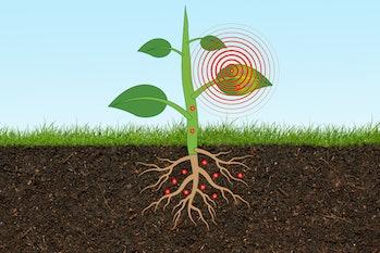 Illustration of plant sensor from MIT