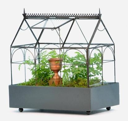 H Potter Plant Terrarium
