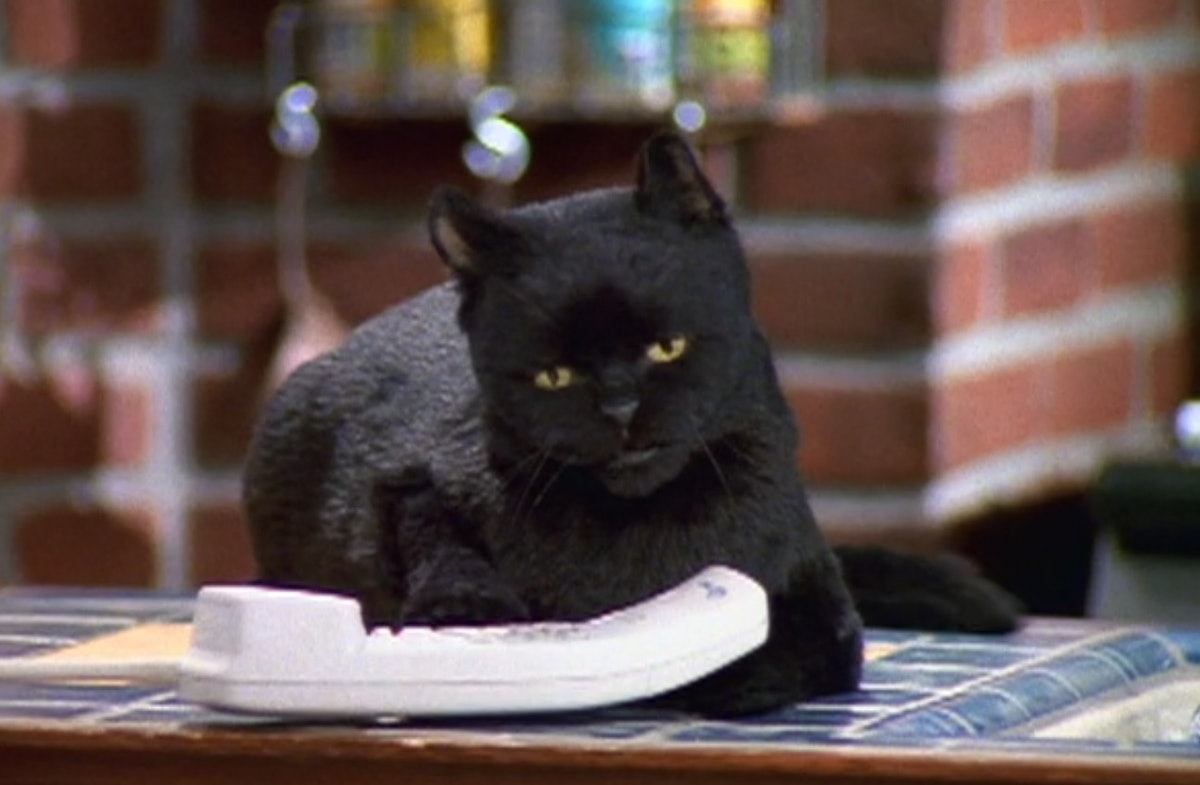 Salem from 'Sabrina the Teenage Witch' appears in 'Chilling Adventures of Sabrina.'