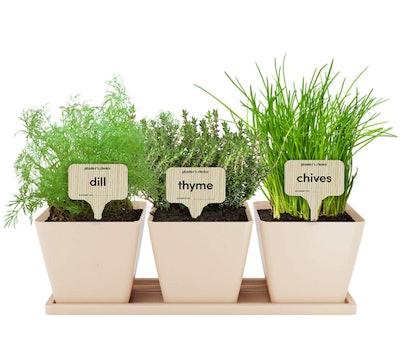 Planters' Choice  Herb Window Garden