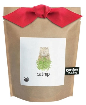 Catnip Garden in a Bag