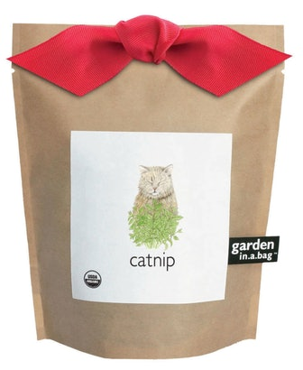 Catnip Garden in a Bag