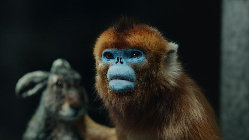 Hester, Golden Monkey