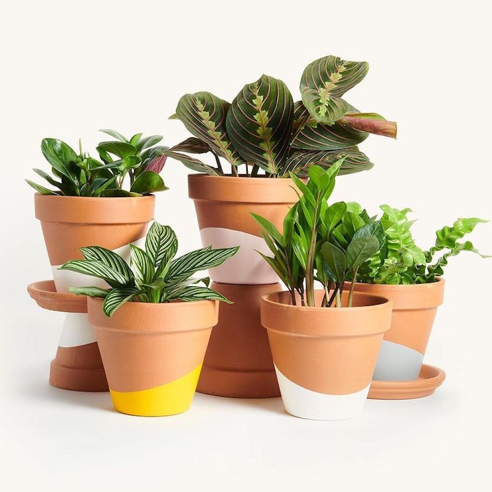 Horti Plant Subscription (3 Months)