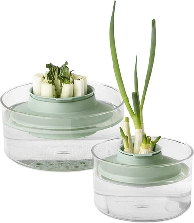 Brabantia Tasty+ Herbs and Vegetables Regrow Kit
