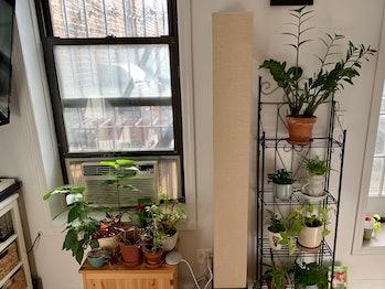 two shelves full of plants