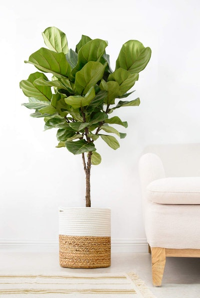 Mkono Cotton Rope Plant Basket
