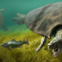 Badass prehistoric turtle used its shell in combat