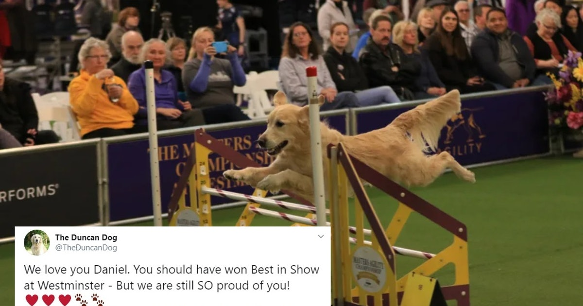 Twitter Is Rallying Around This Golden Retriever After His Westminster Dog Show Performance