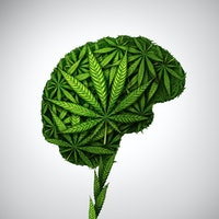 A tiny genetic change could alter the way the brain craves THC