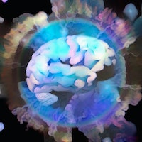 """A tiny area of the brain may enable consciousness, says """"exhilarating"""" study"""