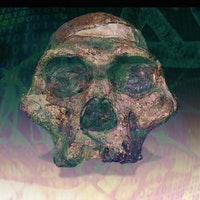 """Ancient """"ghost"""" DNA identified in living humans"""