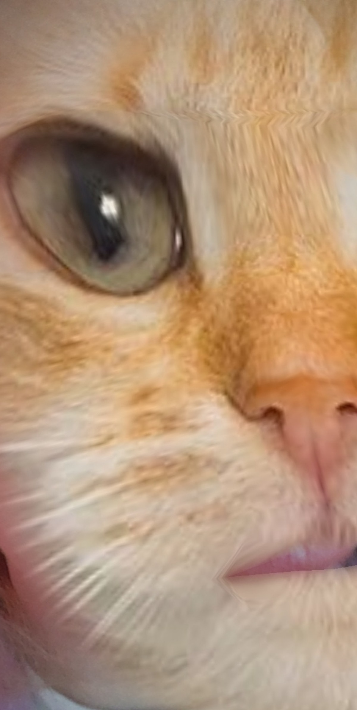 Some of the best cat face filters on Snapchat will help you freak out your feline friend.