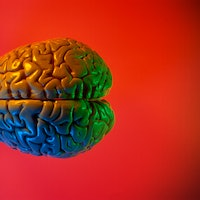 The brain of a lifelong bully looks different than the general population's