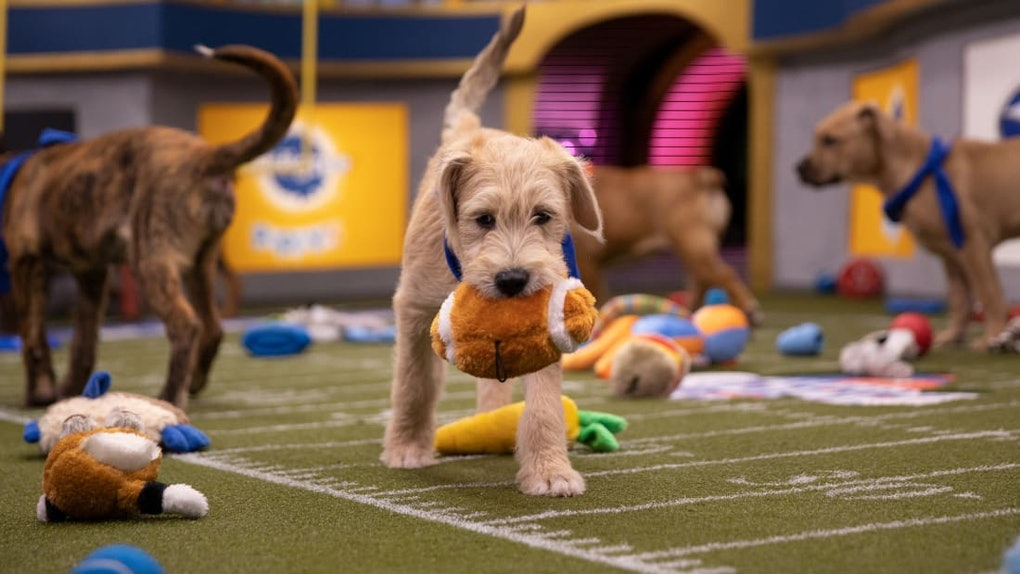these tweets about the puppy bowl are so cute