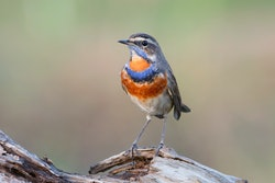 A bird sits on a log