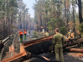 Defence and civilian authorities clear a tree blocking a road near Mallacoota in January.