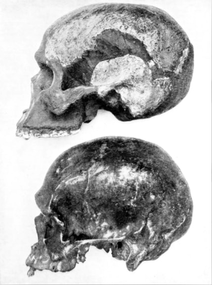 The skull of Piltdown Man was an elaborate hoax.  Ann Ronan Pictures/Print Collector/Getty Images