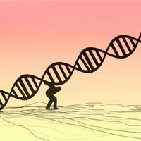 Unhealthy aging could be thwarted in the future by new molecular discovery