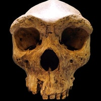 Early humans in Africa may have mated with a mysterious species
